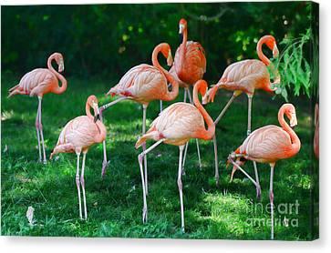 Flamingo Canvas Print by Paul Ward