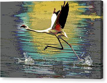 Flamingo Walking On Water Canvas Print by Charles Shoup