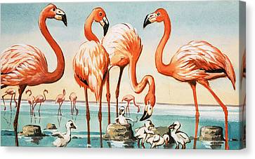 Flamingoes Canvas Print by English School