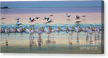 Flamingos And Pelicans Canvas Print by Inge Johnsson