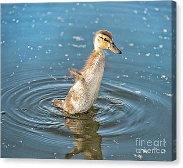 Flappy Duck Canvas Print by Ian McGregor
