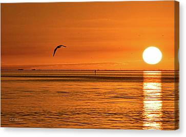 Flight At Sunset Canvas Print by Christopher Holmes