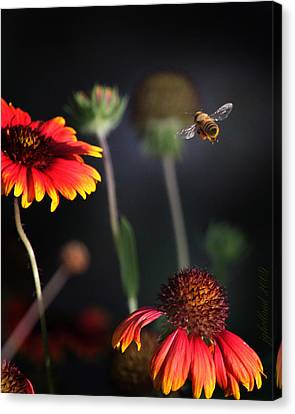 Flight Of A Honey Bee Canvas Print by Joseph G Holland