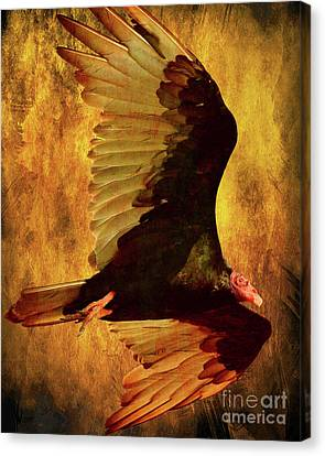 Flight Of A Vulture . Texture . 40d8879 Canvas Print by Wingsdomain Art and Photography