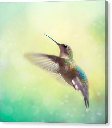 Flight Of Fancy - Square Version Canvas Print by Amy Tyler