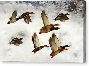 Flight Of The Ducks Canvas Print by Andrea Kollo
