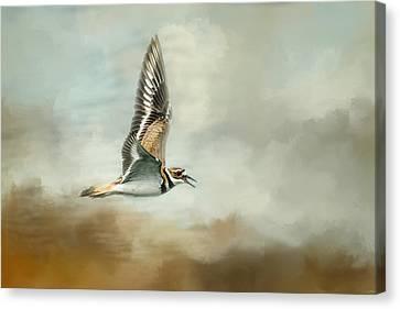 Flight Of The Killdeer Canvas Print by Jai Johnson