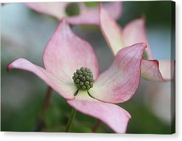Floating Canvas Print by Connie Handscomb