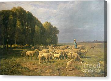 Flock Of Sheep In A Landscape Canvas Print by Charles Emile Jacque