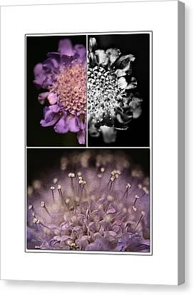 Floralicious  Canvas Print by Bonnie Bruno