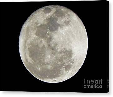 Florida Moon 2-28-2011 Canvas Print by Jack Norton