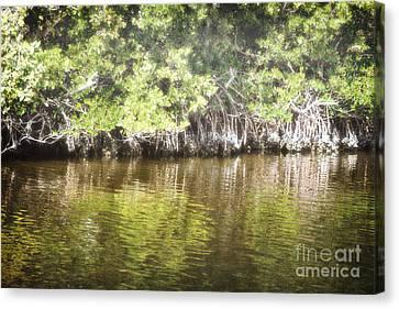 Florida Woodland Mangroves Landscape Canvas Print by Andrea Hazel Ihlefeld