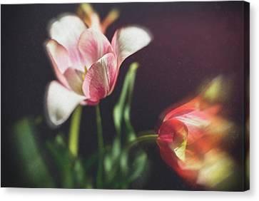 Flower-1 Canvas Print by Okan YILMAZ