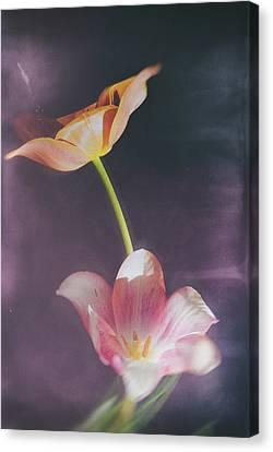 Flower-5 Canvas Print by Okan YILMAZ