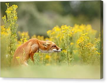 Flower Fox Canvas Print by Roeselien Raimond