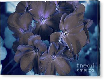 Flower In The Night Canvas Print by Galambosi Tamas