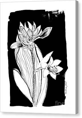 Flower On Black Canvas Print by Cristina Jaco