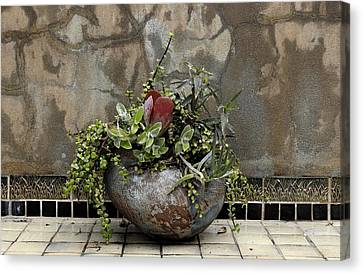 Flower Pot Canvas Print by Viktor Savchenko