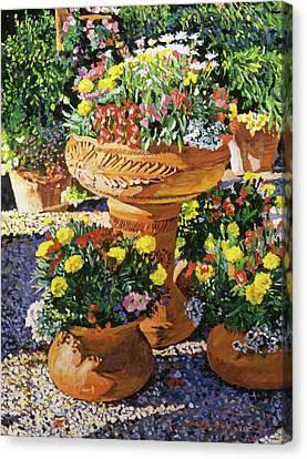Flower Pots In Sunlight Canvas Print by David Lloyd Glover