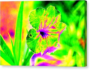 Flower Power Canvas Print by Peter  McIntosh