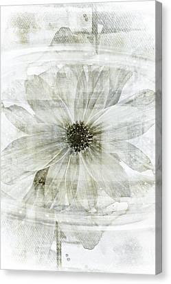 Flower Reflection Canvas Print by Frank Tschakert