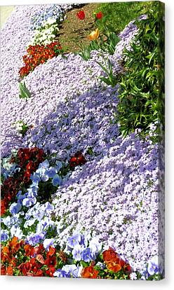 Flowing Phlox Canvas Print by Jan Amiss Photography