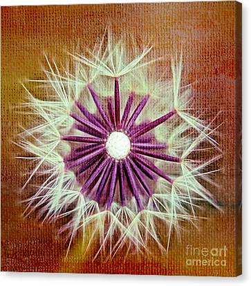 Fluffy Sun - S20b-t01sq Canvas Print by Variance Collections