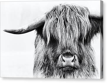 Fluffys Mate Canvas Print by Tim Gainey