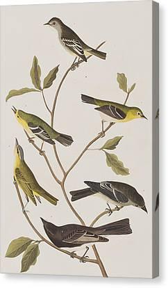 Fly Catchers Canvas Print by John James Audubon