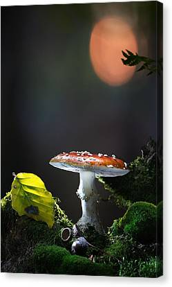 Fly Mushroom - Red Autumn Color Canvas Print by Dirk Ercken