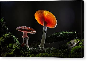 Fly Mushrooms - Red Autumn Colors Canvas Print by Dirk Ercken
