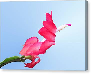 Flying Cactus Canvas Print by Kristin Elmquist