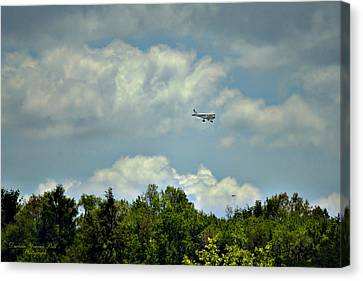 Flying Canvas Print by Darlene Bell