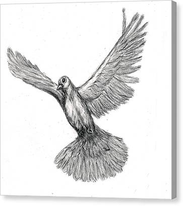 Flying Dove Canvas Print by Joy Neasley