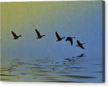 Flying Low Canvas Print by Bill Cannon