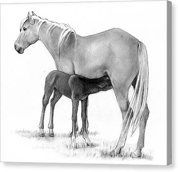 Foal And Mare In Pencil Canvas Print by Joyce Geleynse