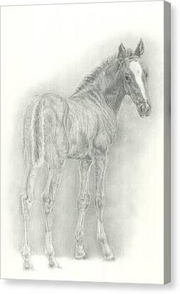Foal Canvas Print by Jennifer Nilsson