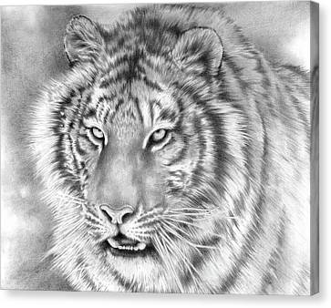 Focus Canvas Print by Cliff Lambert