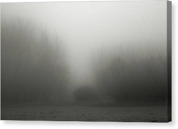 Fog 006 Canvas Print by Mimulux patricia no