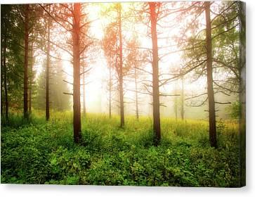 Foggy Morning - Retzer Nature Center Trails Canvas Print by Jennifer Rondinelli Reilly