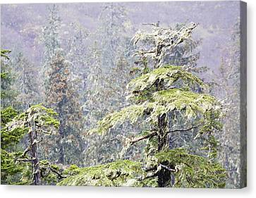 Foggy Tongass Rain Forest Canvas Print by Eggers   Photography