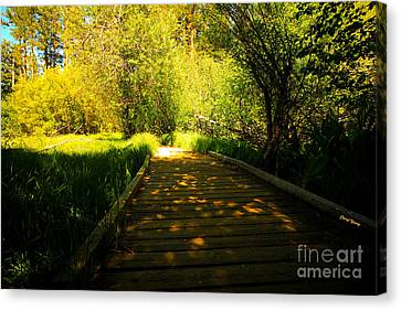 Follow The Path Canvas Print by Cheryl Young