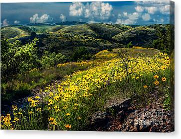 Follow The Path Canvas Print by Tamyra Ayles
