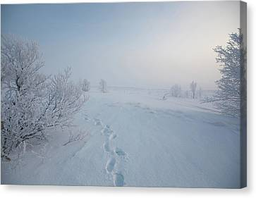 Footprint In Snow Canvas Print by Elin Enger