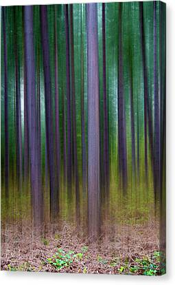 Forest Abstract02 Canvas Print by Svetlana Sewell