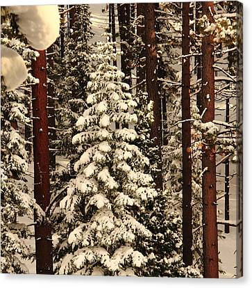 Forest Christmas Tree Canvas Print by Diane Zucker