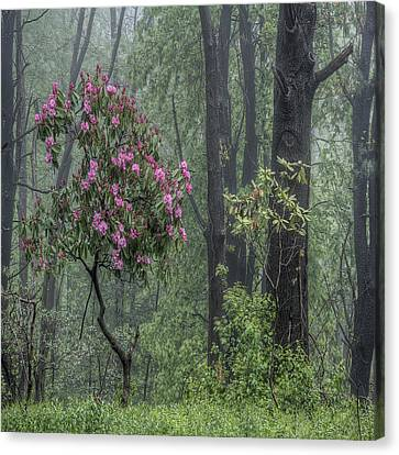 Forest Dancer Canvas Print by David Stone