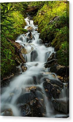 Forest Falls Canvas Print by Hudson Marsh