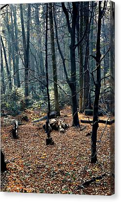 Fir Forest-1 Canvas Print by Henryk Gorecki