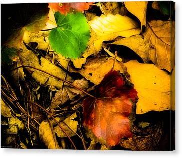 Forest Floor Canvas Print by Ches Black